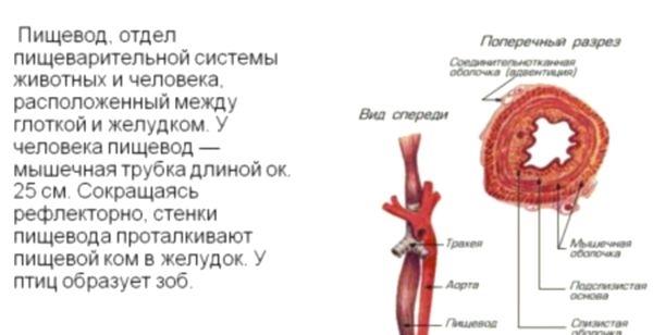 Тромбоз левого поперечного синуса лечение