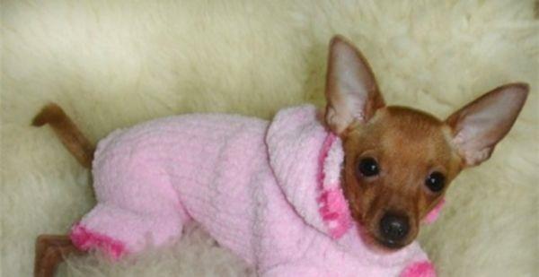 вязание для собак наряжаем согреваем утепляем