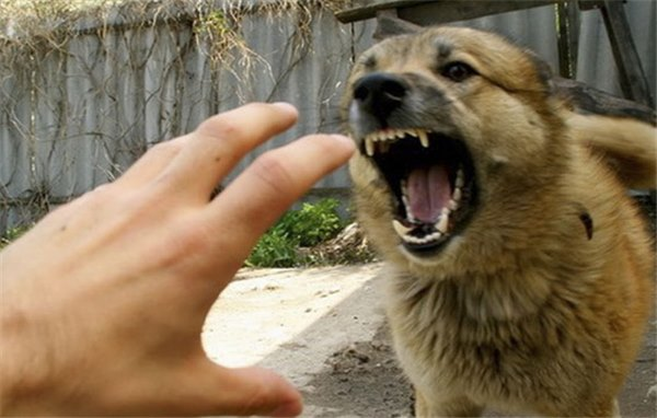 Якщо вкусила домашня собака що робити