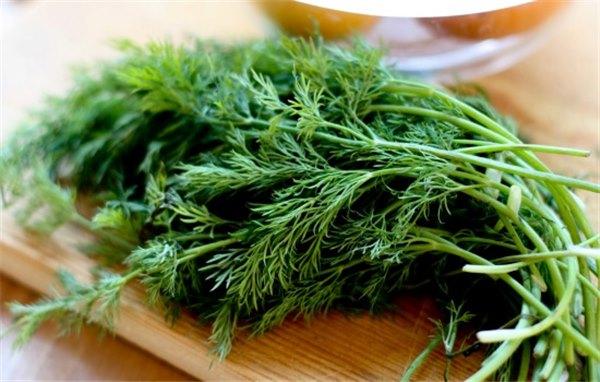 Подарок природы, укроп: польза и вред для здоровья. Низкая калорийность и особые свойства укропа спешат на пользу организму