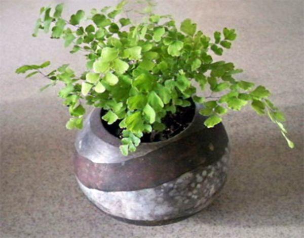 Какие комнатные растения нельзя держать дома, фото 17