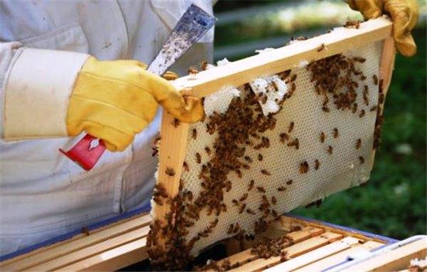 Как хранить соты меда (в сотохранилищах) в домашних 17