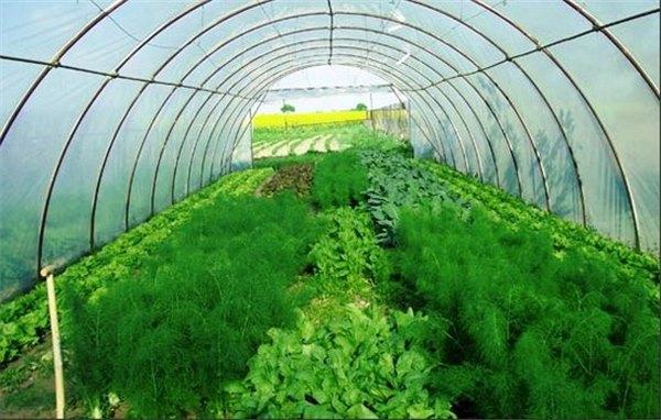 Прибыльный бизнес: выращивание зелени на продажу 89